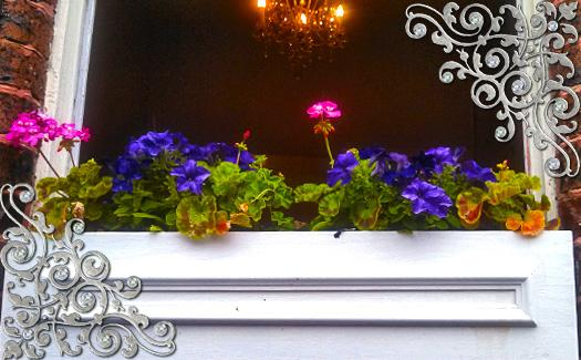 Flower Boxes at the Austen Tea Room